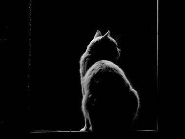 """""""Los Gatos de Baudelaire"""" (fragmento) by Rodrigo E. Ordoñez"""
